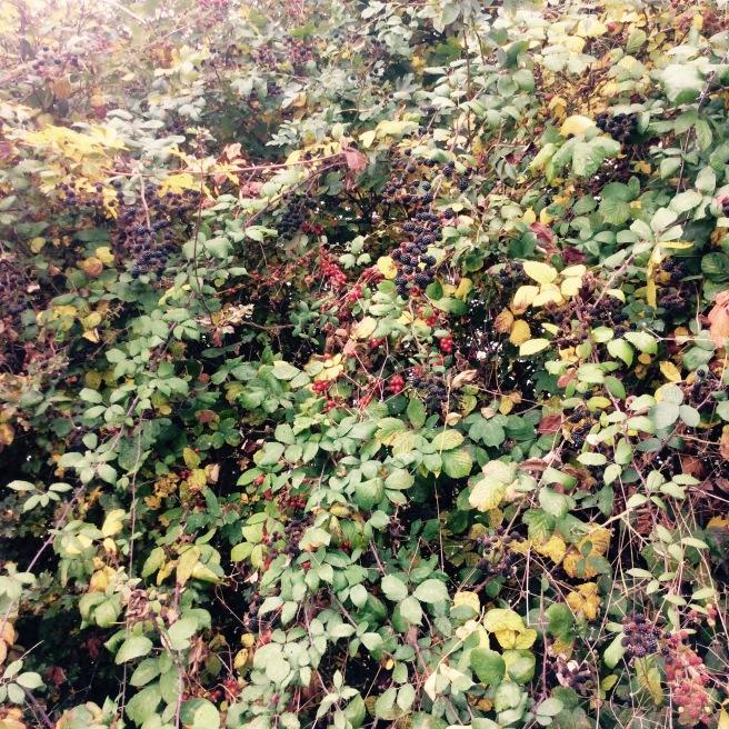 Autumn foraging